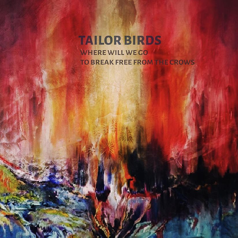 Tailor Birds (AUS)