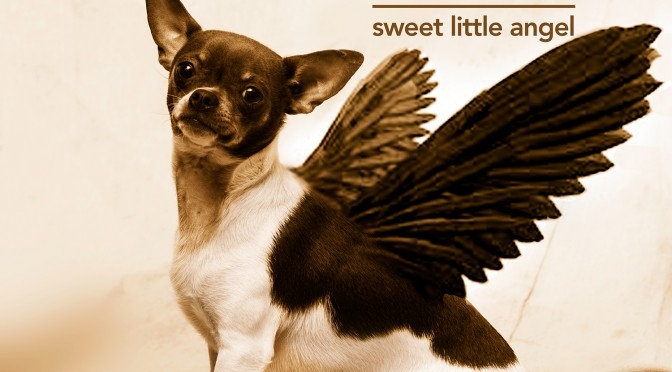 1500sweet little angel single cover